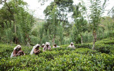 English Tea Shop aktiv für vitale Böden